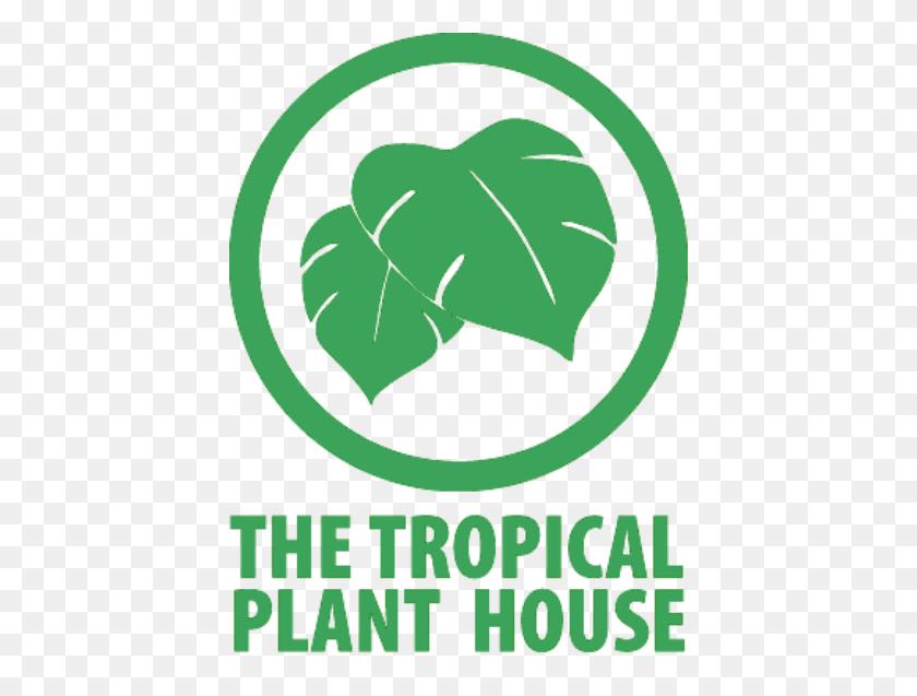 Interior Plant Design Sacramento, Ca The Tropical Plant House - Tropical Plants PNG