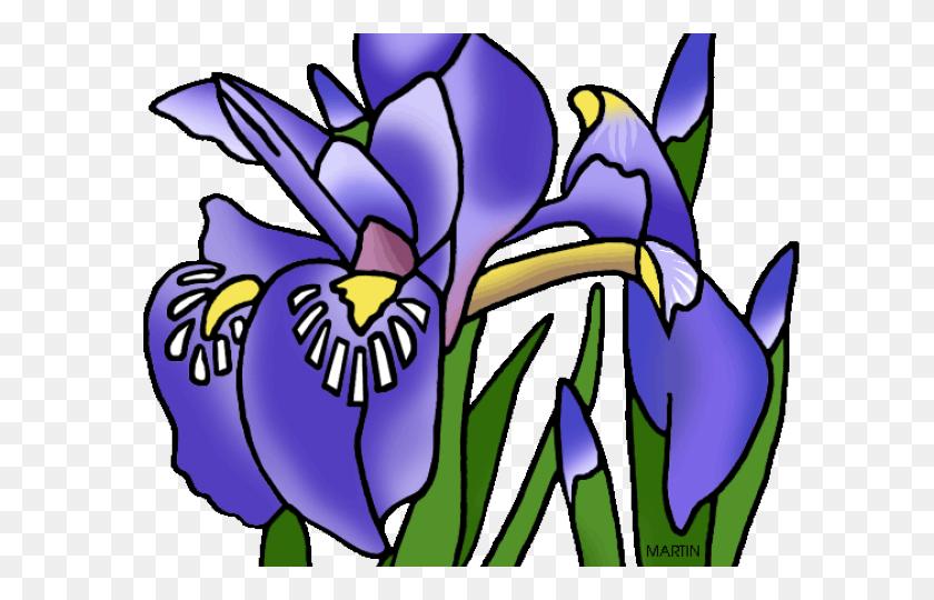 Iris Clipart Bird - Cabbage Clipart