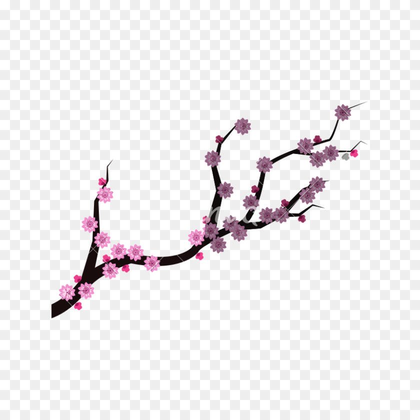 800x800 Isolated China Branch With Flowers Design - Cherry Blossom Branch PNG
