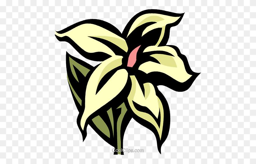 Jasmine Flower Clipart Black And White Graphic Download - Pink Jasmine  Flower Clipart, HD Png Download , Transparent Png Image - PNGitem