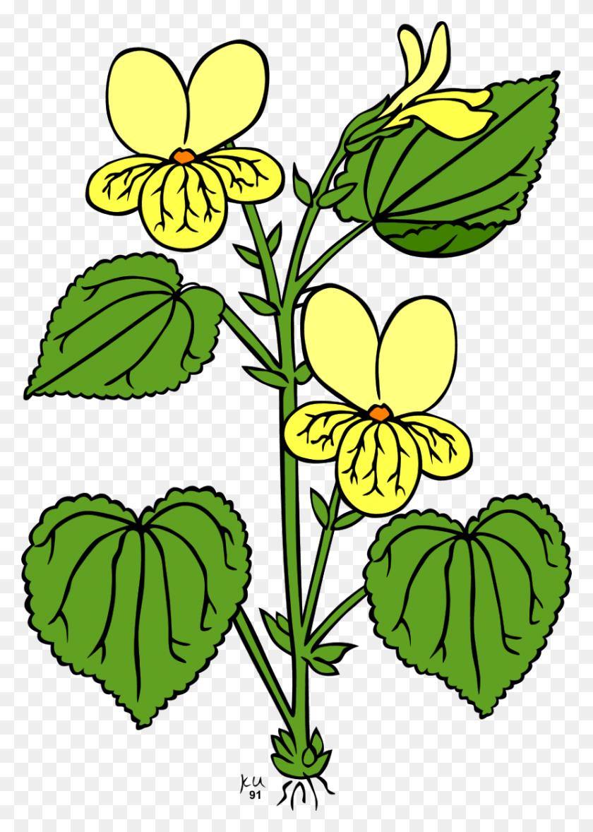 Jungle Flowers Clipart - Jungle Flowers Clipart