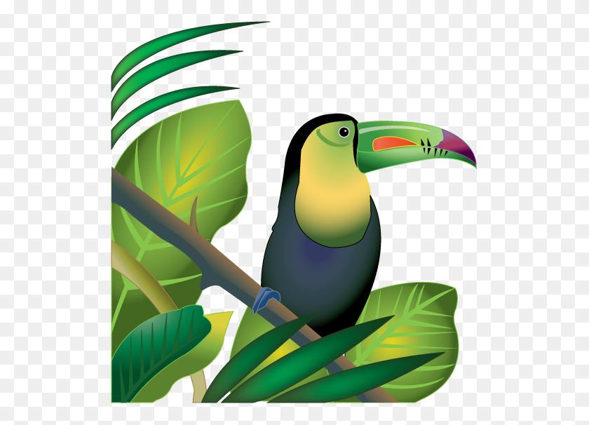 Jungle Plants Clip Art Rainforest Plants Clip Art Pictures - Rainforest Animals Clipart