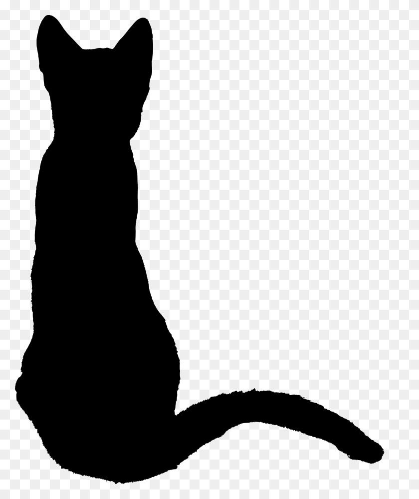 Kitten - Kittens PNG
