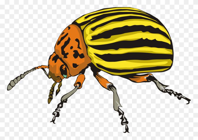 Ladybird Beetle Weevil Scarabs Colorado Potato Beetle Free - Scarab Beetle Clipart