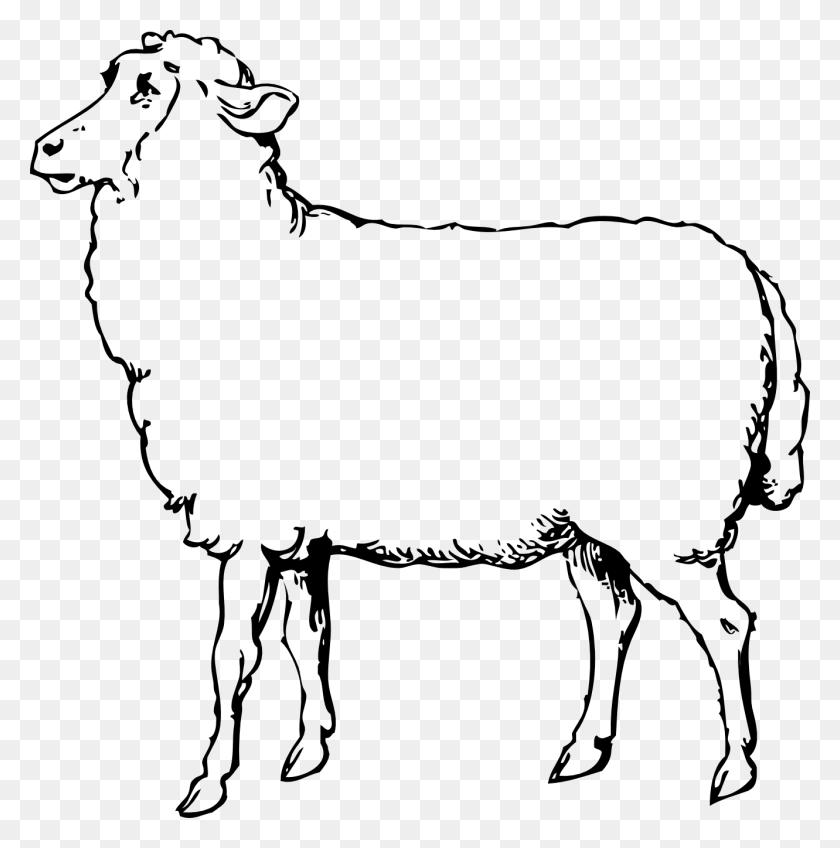 Lamb Clipart Black And White Sheep Black White Line Art Coloring - Sheep Clipart