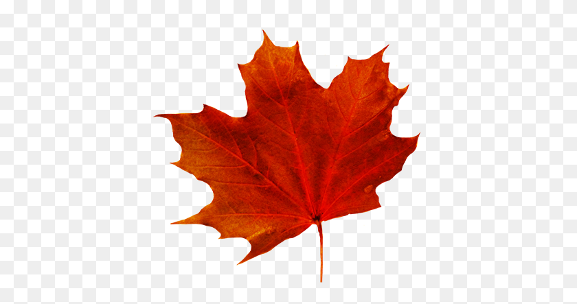 Leaf Clipart - Maple Leaf Clipart