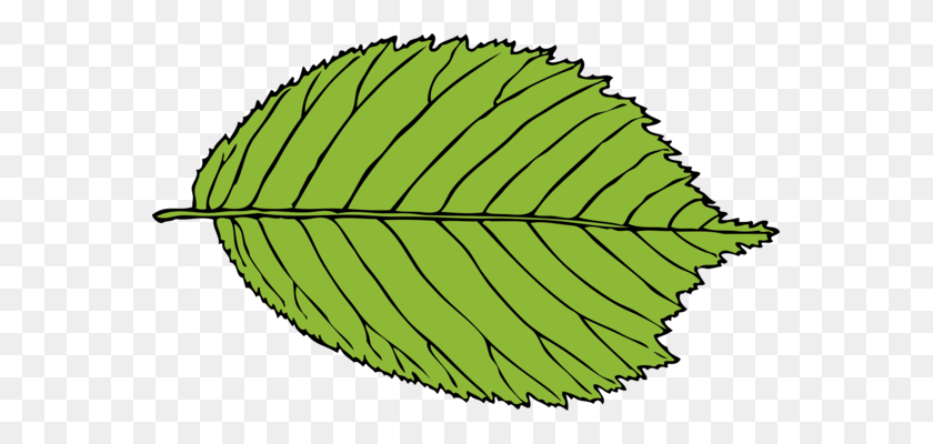 Leaf Computer Icons Green Download Drawing - Lifeline Clipart