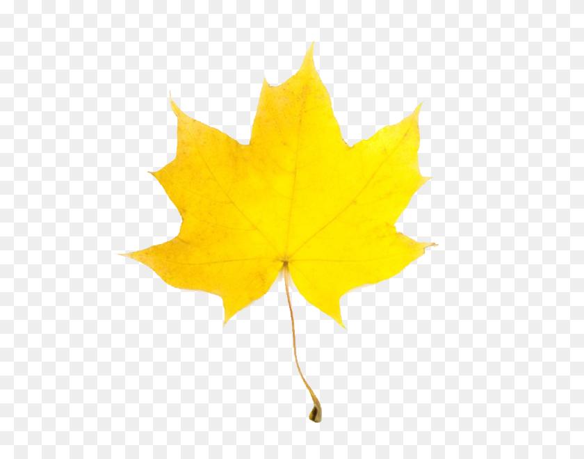 600x600 Leaves Leaf Clip Art Images Free Clipart Images Clipartix - Maple Leaf Clipart