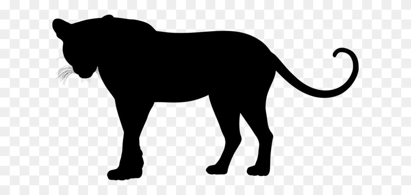 626x340 Leopard Felidae Tiger Cheetah Jaguar - Maui Clipart