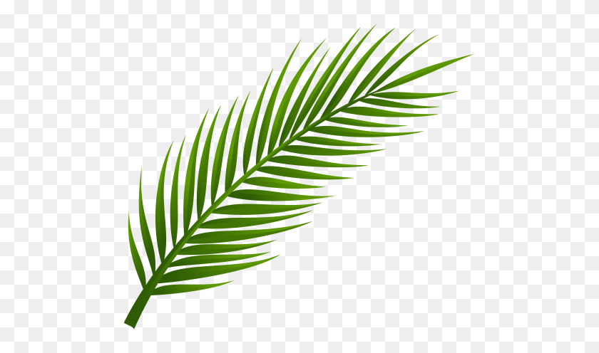 Logo Palm Palm Tree Leaves And Art Laurel Leaves Png Stunning Free Transparent Png Clipart Images Free Download