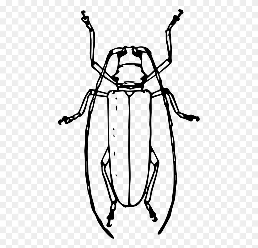 Longhorn Beetle Drawing Volkswagen Beetle Ladybird Beetle Free - Volkswagen Beetle Clipart