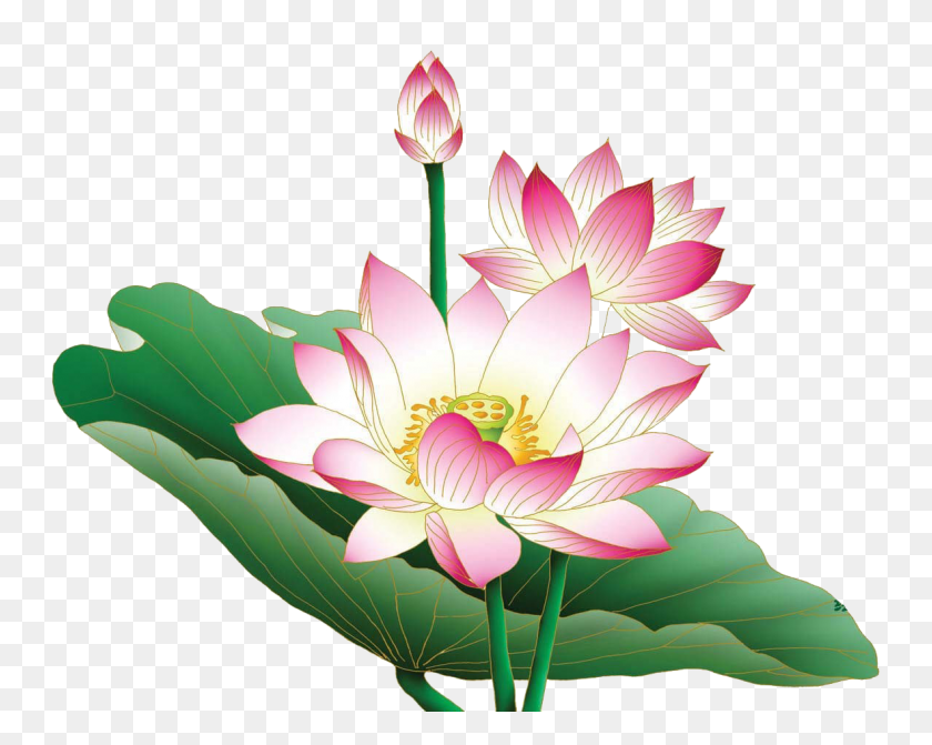 1181x926 Lotus Png Transparent Images - Lotus PNG