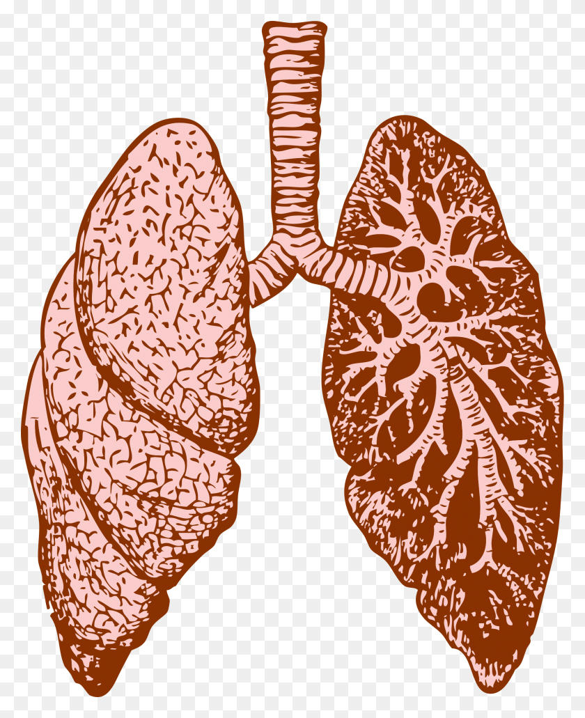 1927x2400 Lungs Icons Png - Lungs PNG