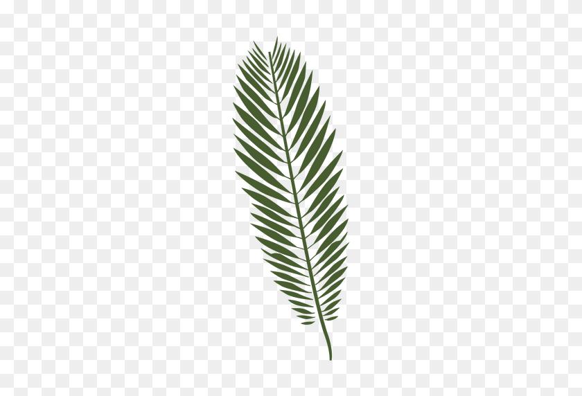 Majesty Palm Leaf Illustration - Palm Tree Leaves PNG