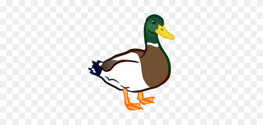 Mallard Duck Bird Goose Cygnini - Mallard Clipart