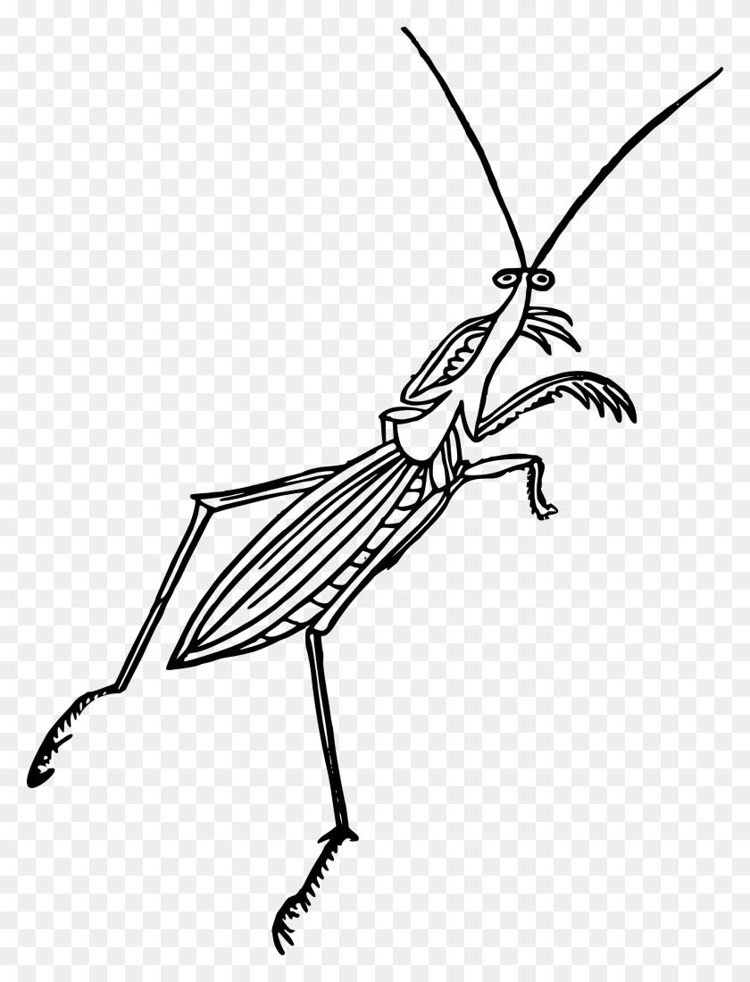 Mantis Icons Png Praying Mantis Png Stunning Free Transparent