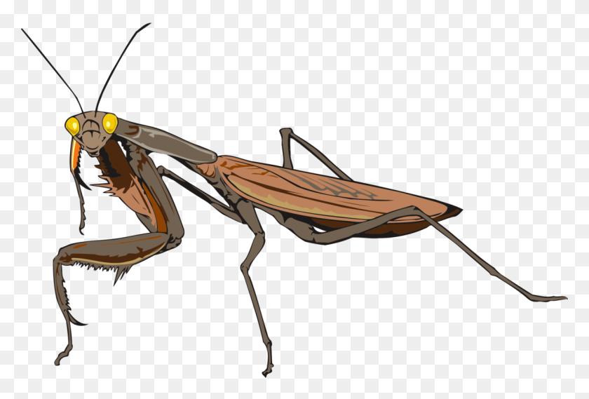 1148x750 Mantis Les Insectes Animal Drawing - Praying Mantis Clipart
