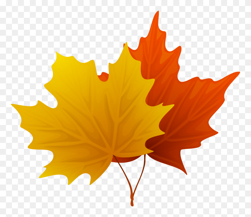 Maple Leaf Clipart Look At Maple Leaf Clip Art Images - Orange Leaf Clipart
