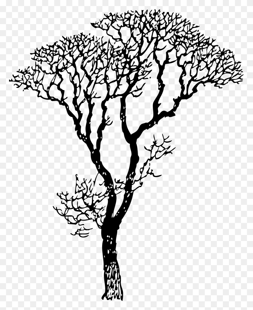 Masterly Trees Tree Drawing Trees Drawing Black Tree Drawing - White Tree PNG