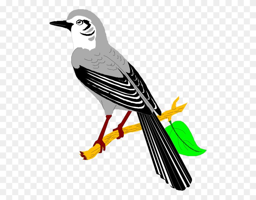 Mockingbird Clip Art - Mockingbird Clipart