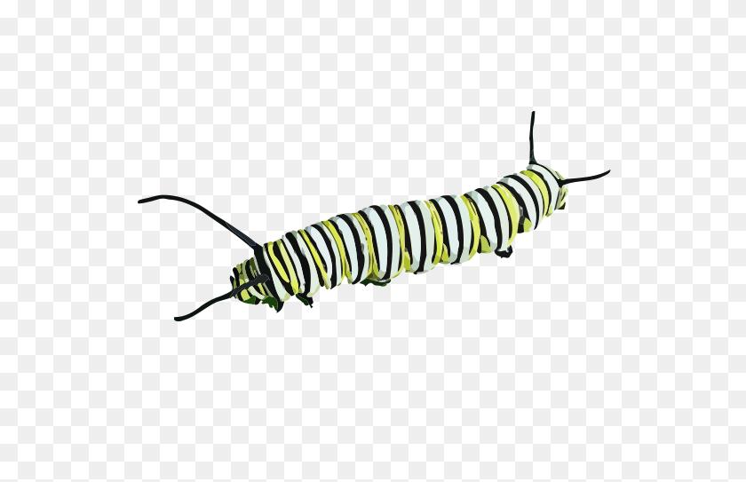 Monarch Caterpillar Clipart Clip Art Images - Monarch Butterfly Clipart