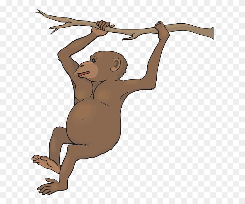 Monkey Clip Art For Teachers - World Clipart PNG