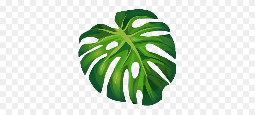324x320 Monstera Leaves Freetoedit - Monstera Leaf Clipart