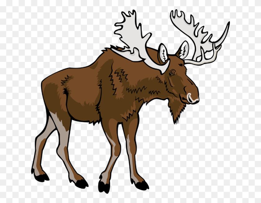 640x596 Moose Png Images Transparent Free Download - Moose PNG