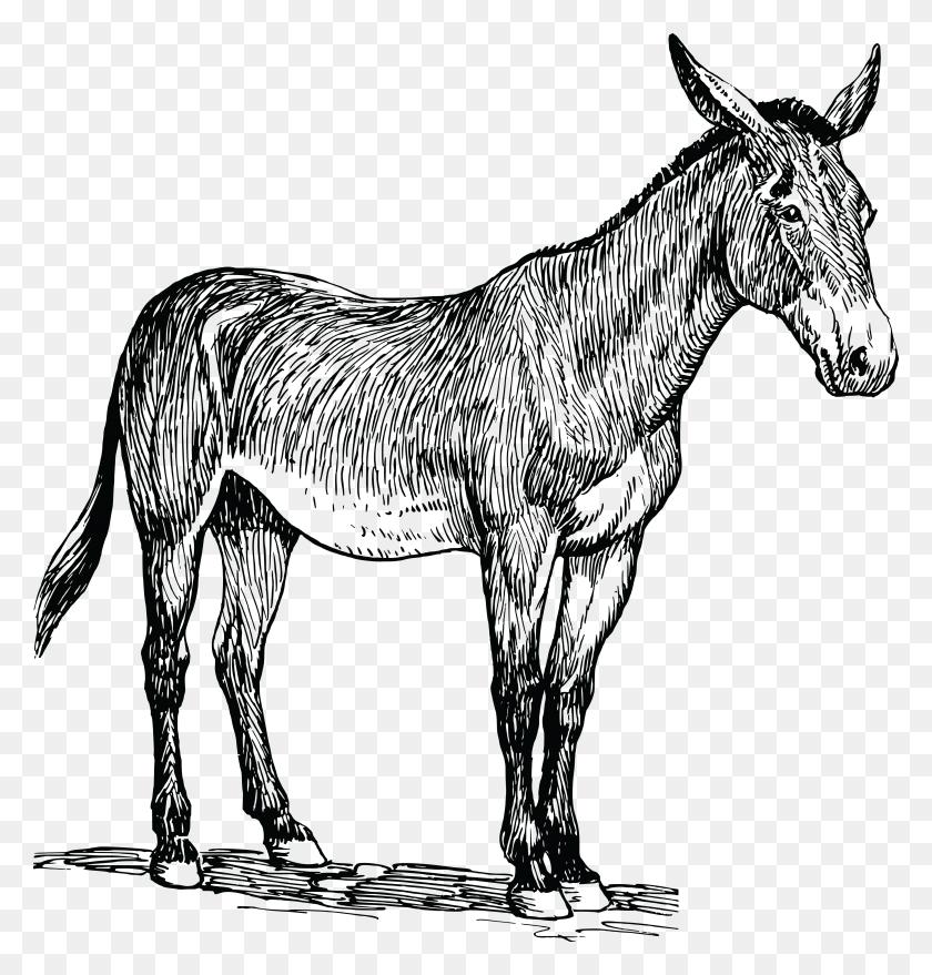 Mule Clip Art Free Images - Mule Clipart