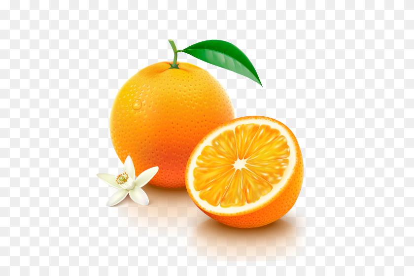 Navel Oranges El Wadi International Trade Co - Oranges PNG