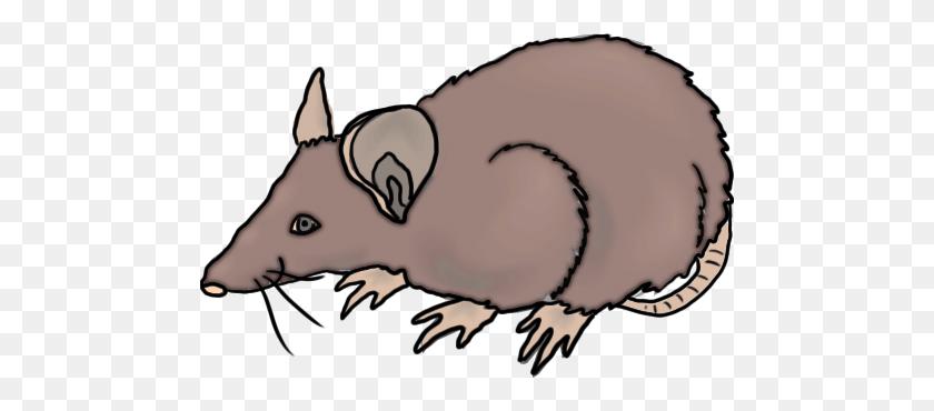 New Rat Clip Art Rat Black And White Clipart Clipart Suggest - Rat Clipart Black And White