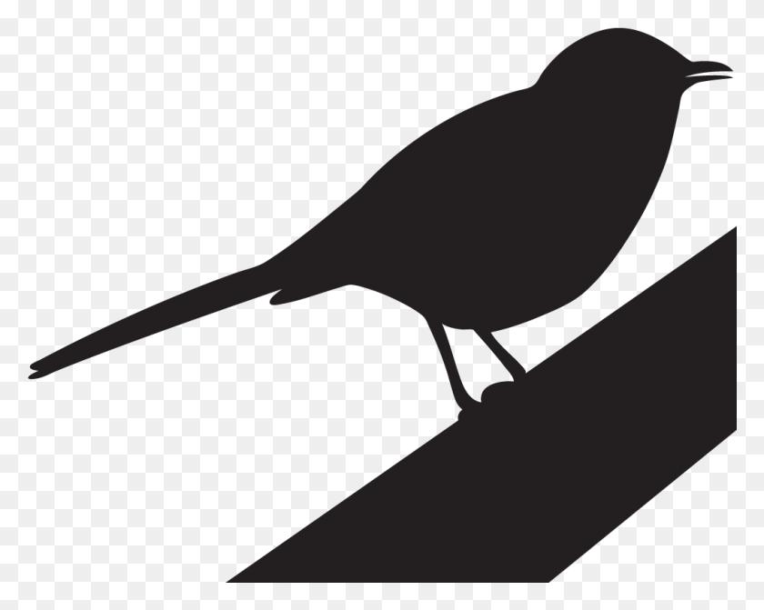 Northern Mockingbird Overview All About Birds Cornell - Mockingbird Clipart