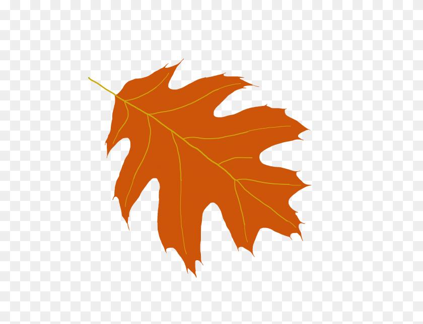Oak Leaf Clip Art Look At Oak Leaf Clip Art Clip Art Images - Maple Tree Clipart