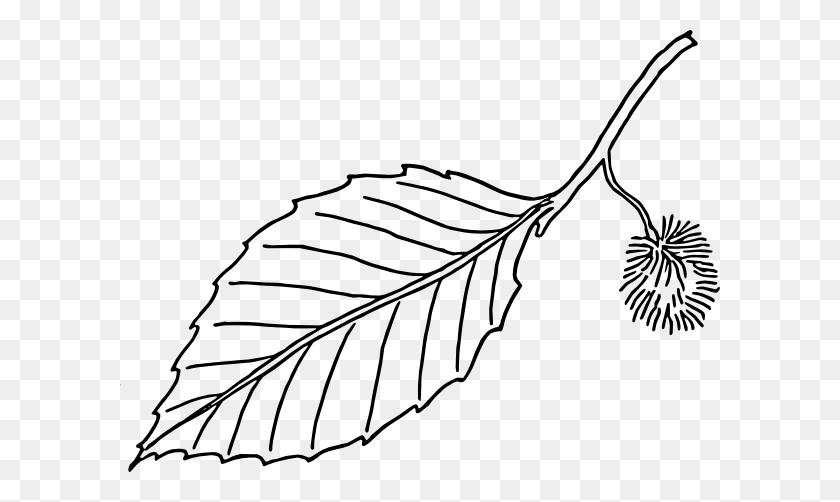 Oak Leaf Clipart Black And White Oak Tree Clipart Black And White