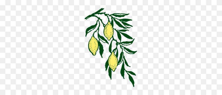Olive Branch Clip Art - Olive Branch Clip Art