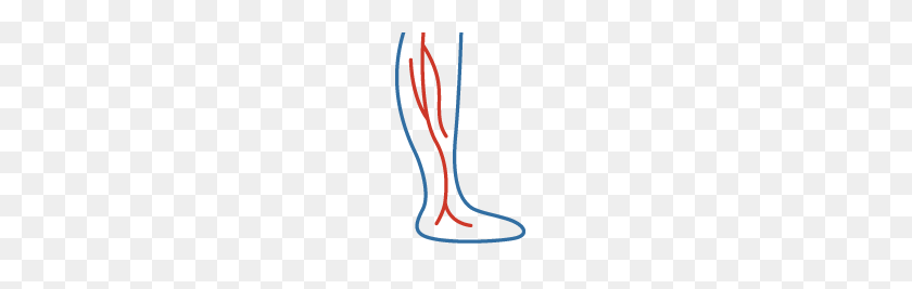 Online Screening For Varicose Spider Veins Treatment Ut Physicians - Veins PNG