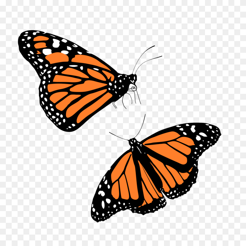 Onlinelabels Clip Art - Monarch Butterfly Clipart