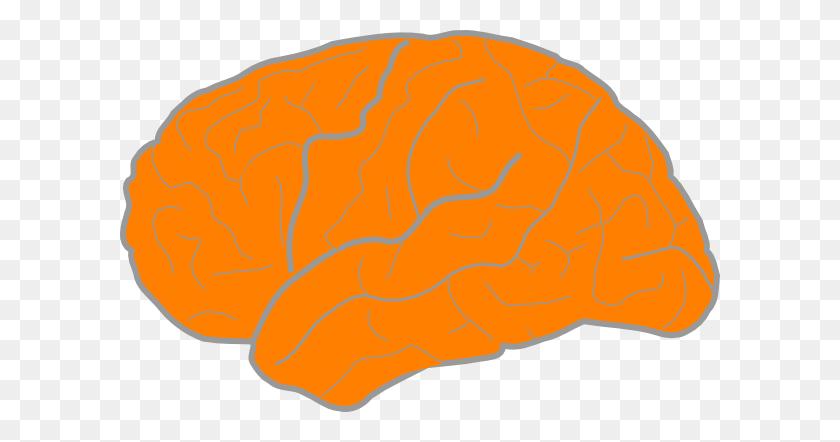 Orange Brain Clip Art - Brain Clipart Transparent