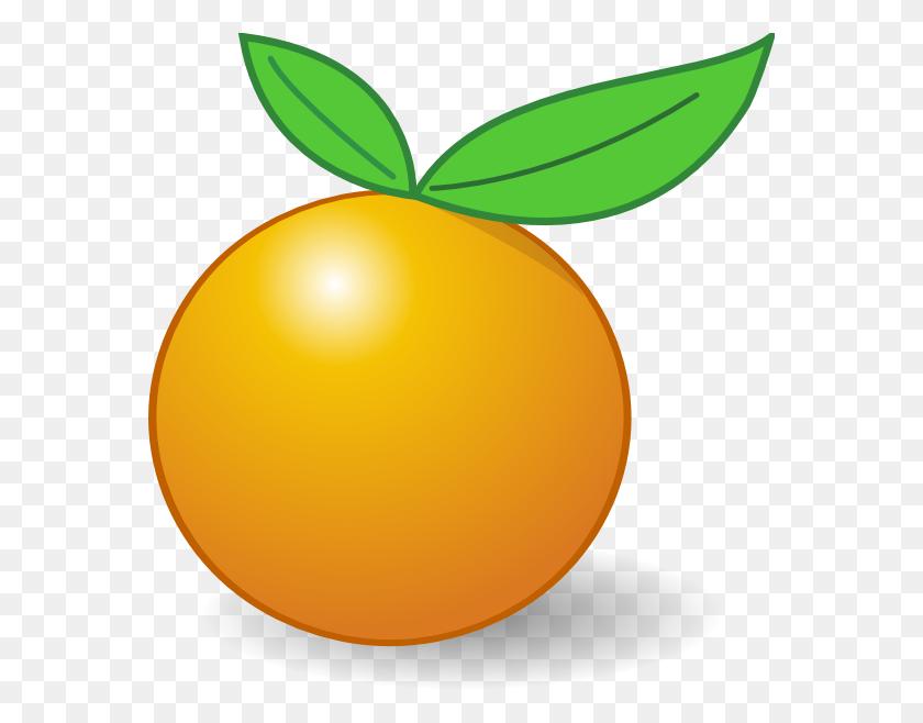570x598 Orange Clip Art - Oranges PNG