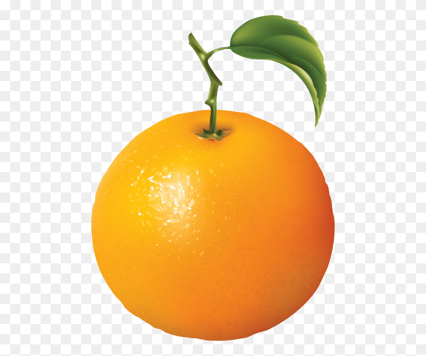 480x643 Orange Oranges Png - Oranges PNG
