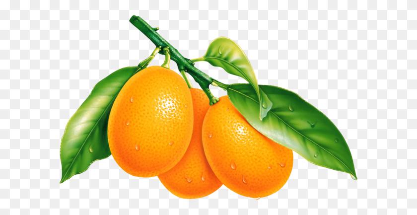 Oranges, Orange Png Image, Free Download - Oranges PNG