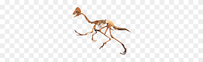 Oviraptorid Clean Frases - Dinosaur Bones PNG