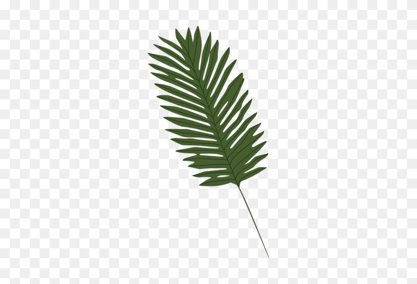 Palm Leaf Illustration - Palm Tree Leaves PNG