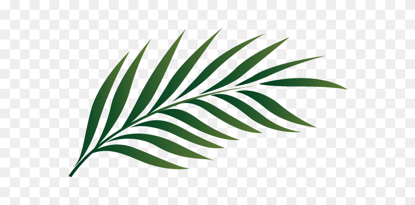 Palm Leaf Logo Free Transparent Images With Cliparts Vectors Palm Leaf Clipart Black And White Stunning Free Transparent Png Clipart Images Free Download Flower black and white and transparent png images free download. palm leaf logo free transparent images