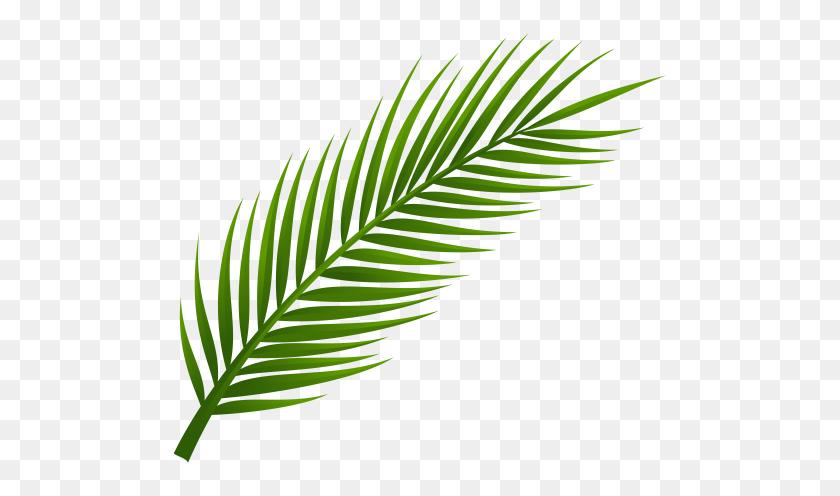 Palm Tree Leaf Png Clip Art Tattoos Palm Tree - Tree Drawing PNG