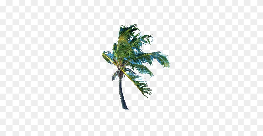 Palmtree - Palm Tree PNG