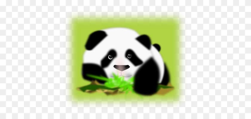 Panda, Bear, Back, White, Face Panda Pics Panda - Panda Face PNG