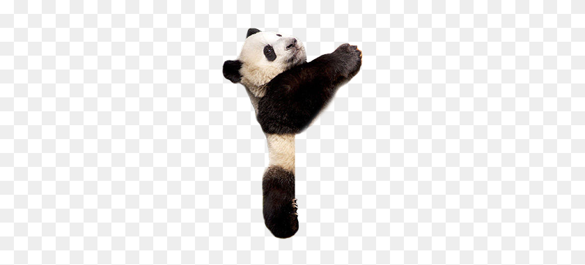 Panda Png Images - Pandas PNG