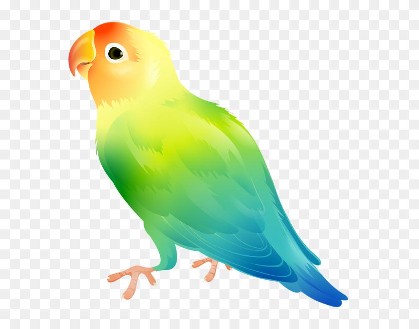 575x600 Parrot Bird Png Clip Art - Parrot Clipart