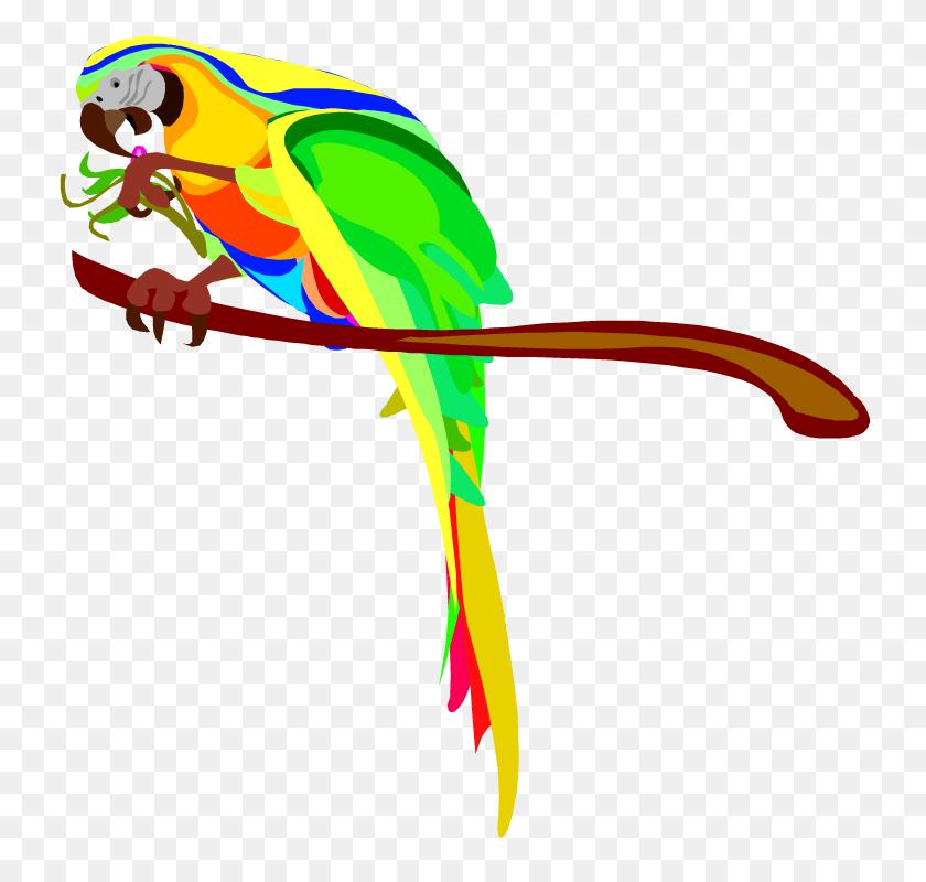 750x740 Parrot Clipart Macaw - Parrot Clipart